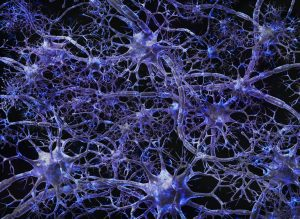Digital representation of nerve cells (Source: Wellcome Images)