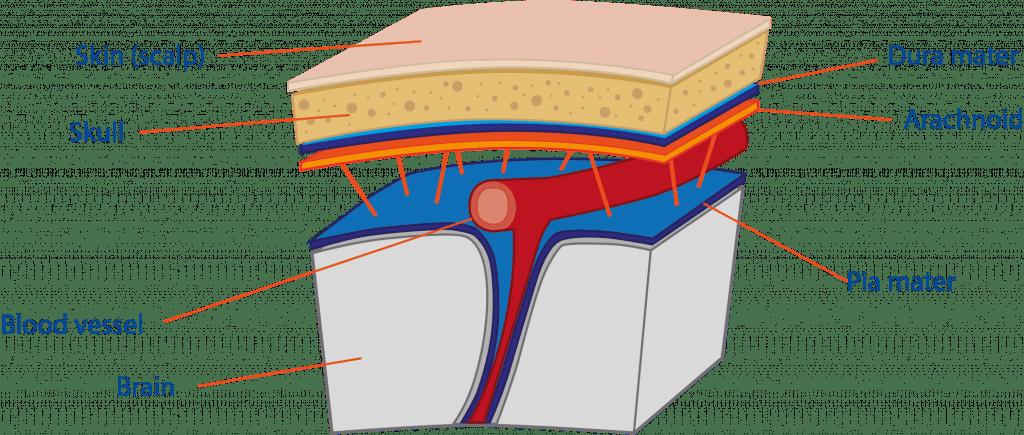 Brain Spine Foundation Meningitis