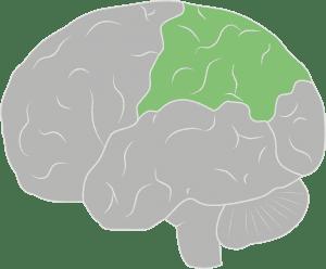 Brain & Spine Foundation | Anatomy of the brain and spine