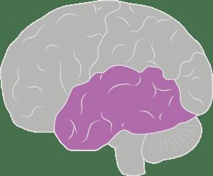 brain spine foundation anatomy of the brain and spine